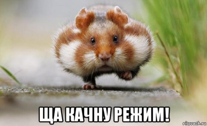 http://zavtra.ru/upl/15259/alarge/pic_71100add09a.jpg