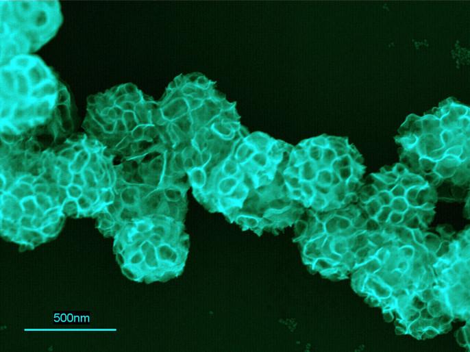 Русские биохимики создали наночастицы, поражающие раковые клетки