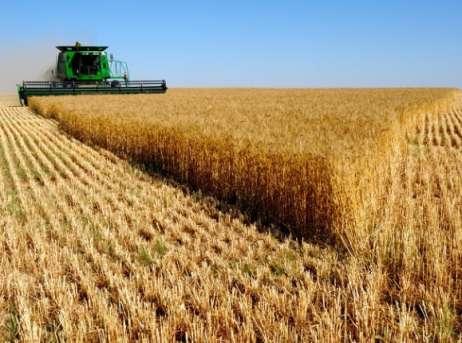 РФ кшестому сентября собрала 97 млн тонн зерна